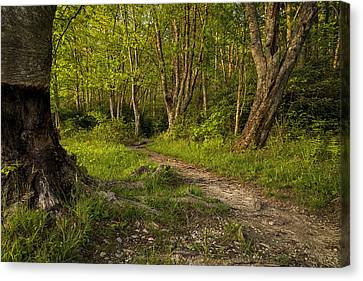 Price Lake Trail - Blue Ridge Parkway Canvas Print