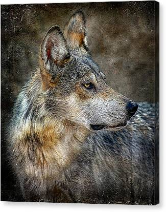 Summertime Coated Wolf Canvas Print by Elaine Malott