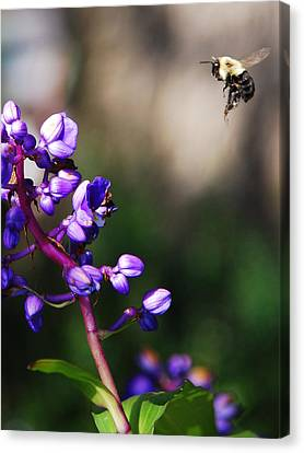Canvas Print featuring the photograph Summertime by Margaret Palmer