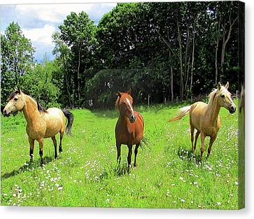 Canvas Print - Summertime Moment With The Paso Fino Mares by Patricia Keller