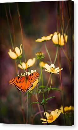 Summertime Monarch Canvas Print by Parker Cunningham