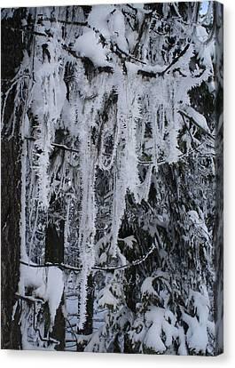 Sumpter Winter Canvas Print by Caprice Scott