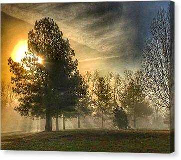 Canvas Print featuring the photograph Sun And Trees by Sumoflam Photography