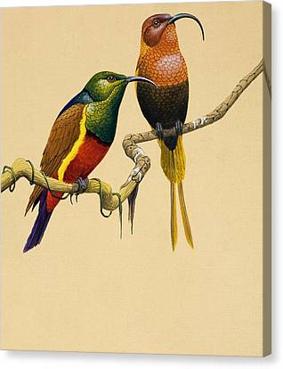 Sun Birds Canvas Print by English School