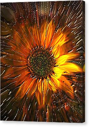 Sun Burst Canvas Print by Kevin Caudill