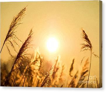 Sun Canvas Print by Daniel Heine
