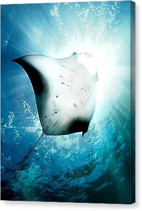 Sun Diver Canvas Print