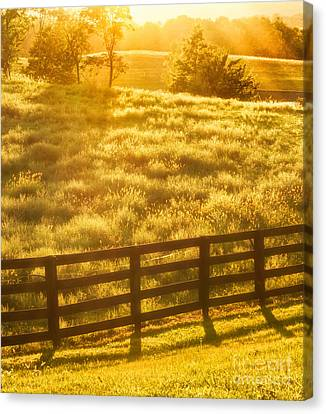 Sun-drenched Pasture Canvas Print by Mark Miller
