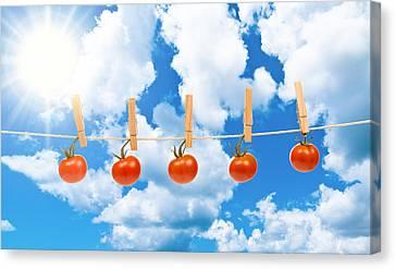 Sun Dried Tomatoes Canvas Print by Amanda Elwell