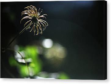 Canvas Print featuring the photograph Sun Fire by Wanda Brandon