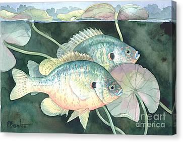 Sun Fish Canvas Print