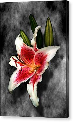 Sun Gazer Lily Canvas Print by Roger Soule