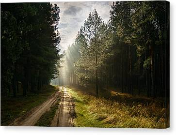 Canvas Print featuring the photograph Sun Light At Pine Forest by Dmytro Korol