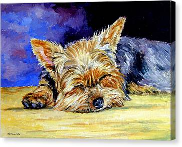 Sun Light Snoozer - Yorkshire Terrier Canvas Print