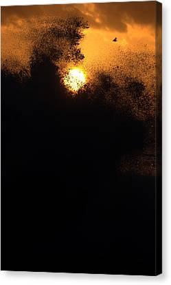 Sun Monster Canvas Print by Brad Scott