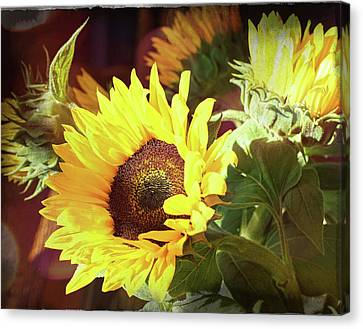 Canvas Print featuring the photograph Sun Of The Flower by Michael Hope