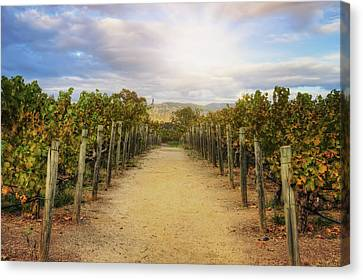 Sun Over Vineyard At Winery In Napa Valley 2 Canvas Print by Jennifer Rondinelli Reilly - Fine Art Photography