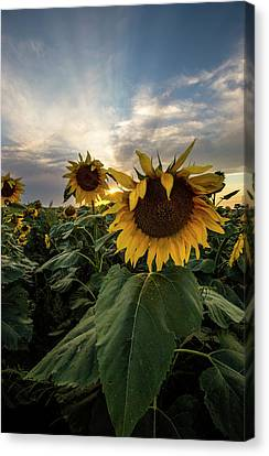Canvas Print featuring the photograph Sun Rays  by Aaron J Groen