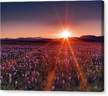 Sun Rays At Camas Prairie Canvas Print by Leland D Howard