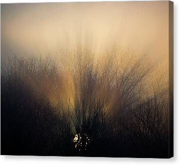 Sun Rays In The Fog Canvas Print