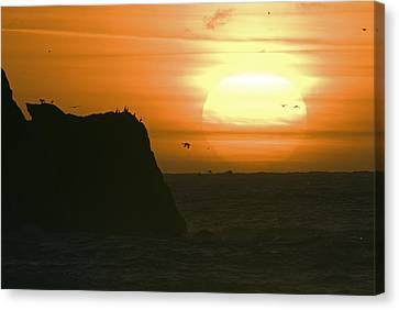 Sun Setting With Flying Birds Canvas Print by Rich Reid
