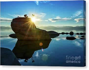 Bonsai Canvas Print - Sun Star Mirror by Jamie Pham