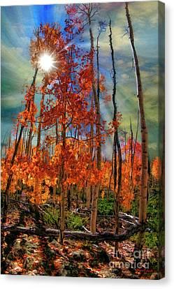 Sun Though Rising Fall Canvas Print by Blake Richards