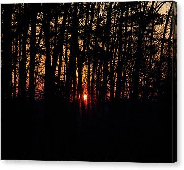 Sun Through The Woods Canvas Print