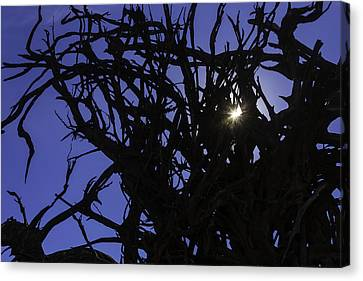 Sun Through Tree Roots Canvas Print by Garry Gay