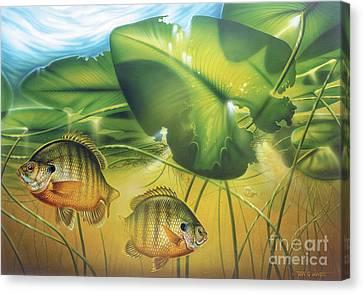 Sunbay Bluegill Canvas Print