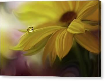 Sunbeam... Canvas Print by Juliana Nan