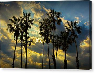 Canvas Print featuring the photograph Sunbeams And Palm Trees By Cabrillo Beach by Randall Nyhof