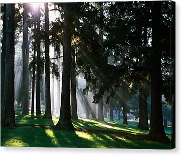 Sunbeams Through Misty Trees, Oregon Canvas Print by Panoramic Images