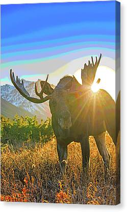 Canvas Print - Sunburst In The Antler Abstract 1 by Tim Grams