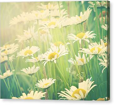 Sunday Morning Canvas Print by Amy Tyler