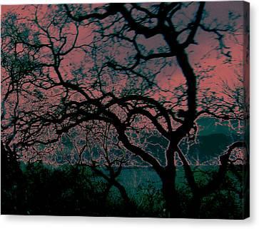 Sundown Canvas Print by Tim Tanis