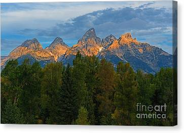 Sundrise On Grand Tetons Canvas Print by Sharon Seaward