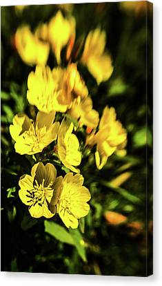 Canvas Print featuring the photograph Sundrops by Onyonet  Photo Studios