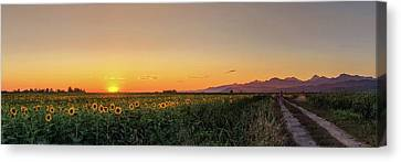 Sunfield Road Canvas Print