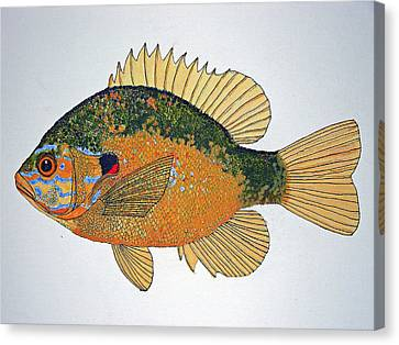 Sunfish South Usa Canvas Print by Don Seago