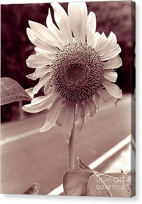 Canvas Print featuring the photograph Sunflower 1 by Mukta Gupta