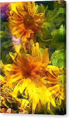 Sunflower 6 Canvas Print by Pamela Cooper