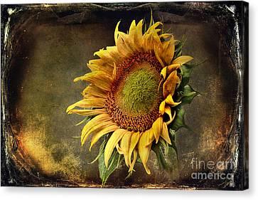 Sunflower Art 2 Canvas Print by Sari Sauls