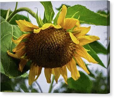 Sunflower Art II Canvas Print