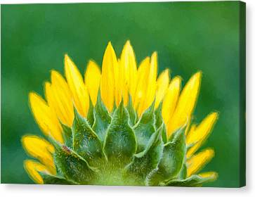 Nature Center Canvas Print - Sunflower Back  by Terry DeLuco