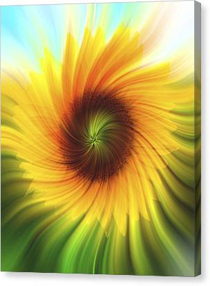 Sunflower Beams 2 Canvas Print by Terry DeLuco