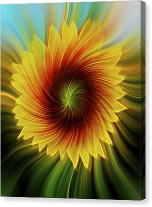 Sunflower Beams Canvas Print by Terry DeLuco