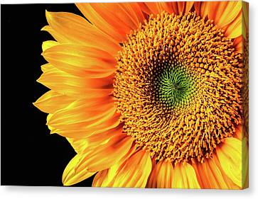 Sunflower Beauty Close Up Canvas Print