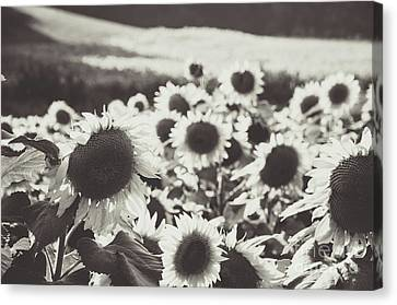 Canvas Print featuring the photograph Sunflower Black And White 1 by Andrea Anderegg