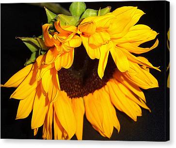 Sunflower Bliss Canvas Print by Dottie Dees